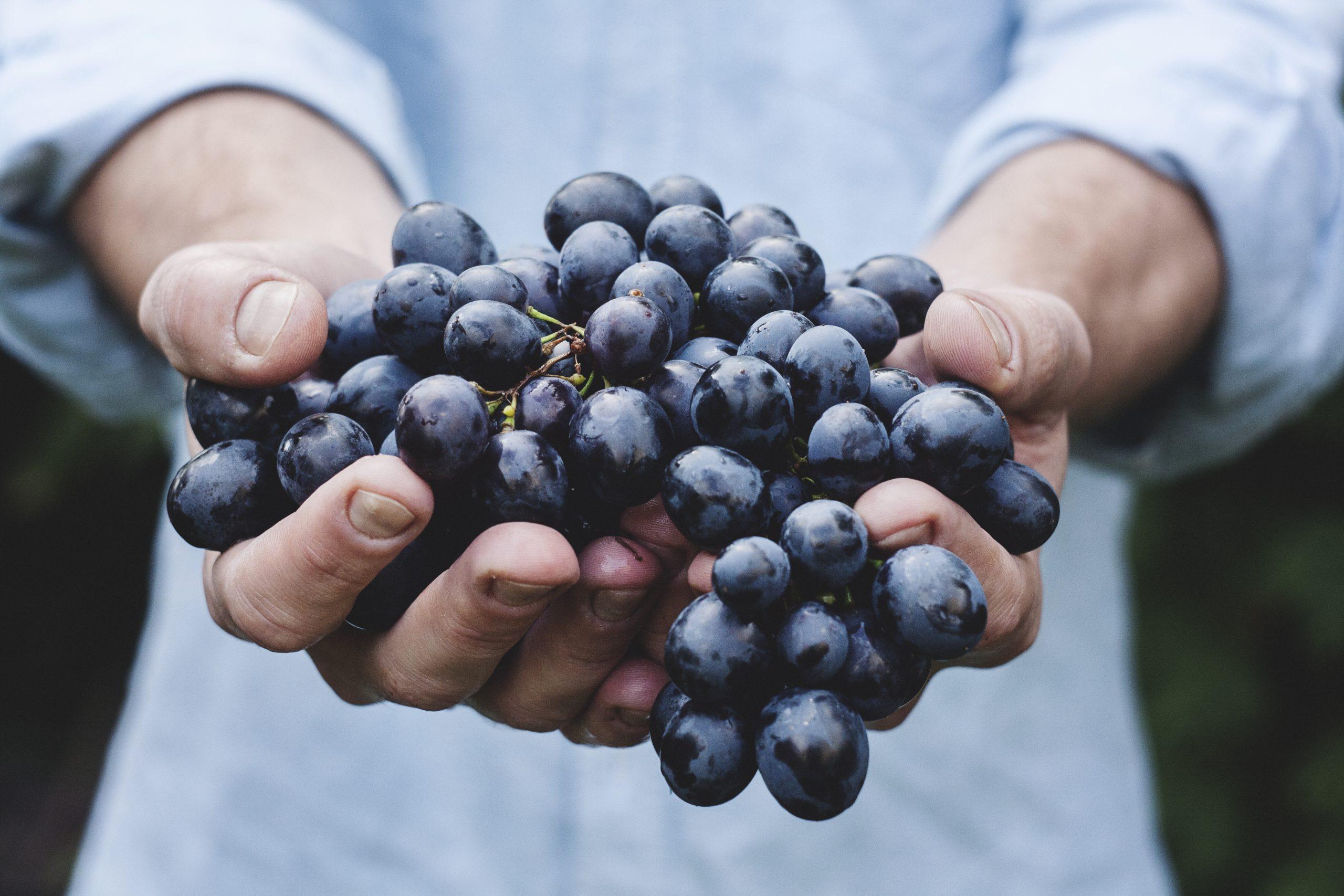 Winogrona z Mołdawii
