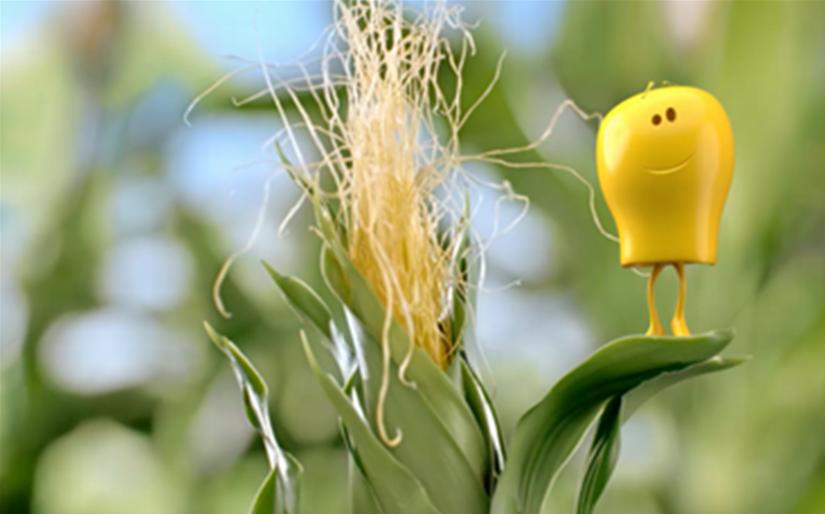 Reklama Bonduelle wspierająca kukurydzę już na ekranach