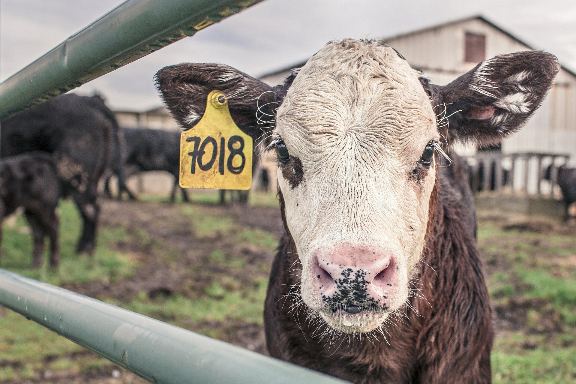 Rozmiary produkcji zwierzęcej w 2019 r.