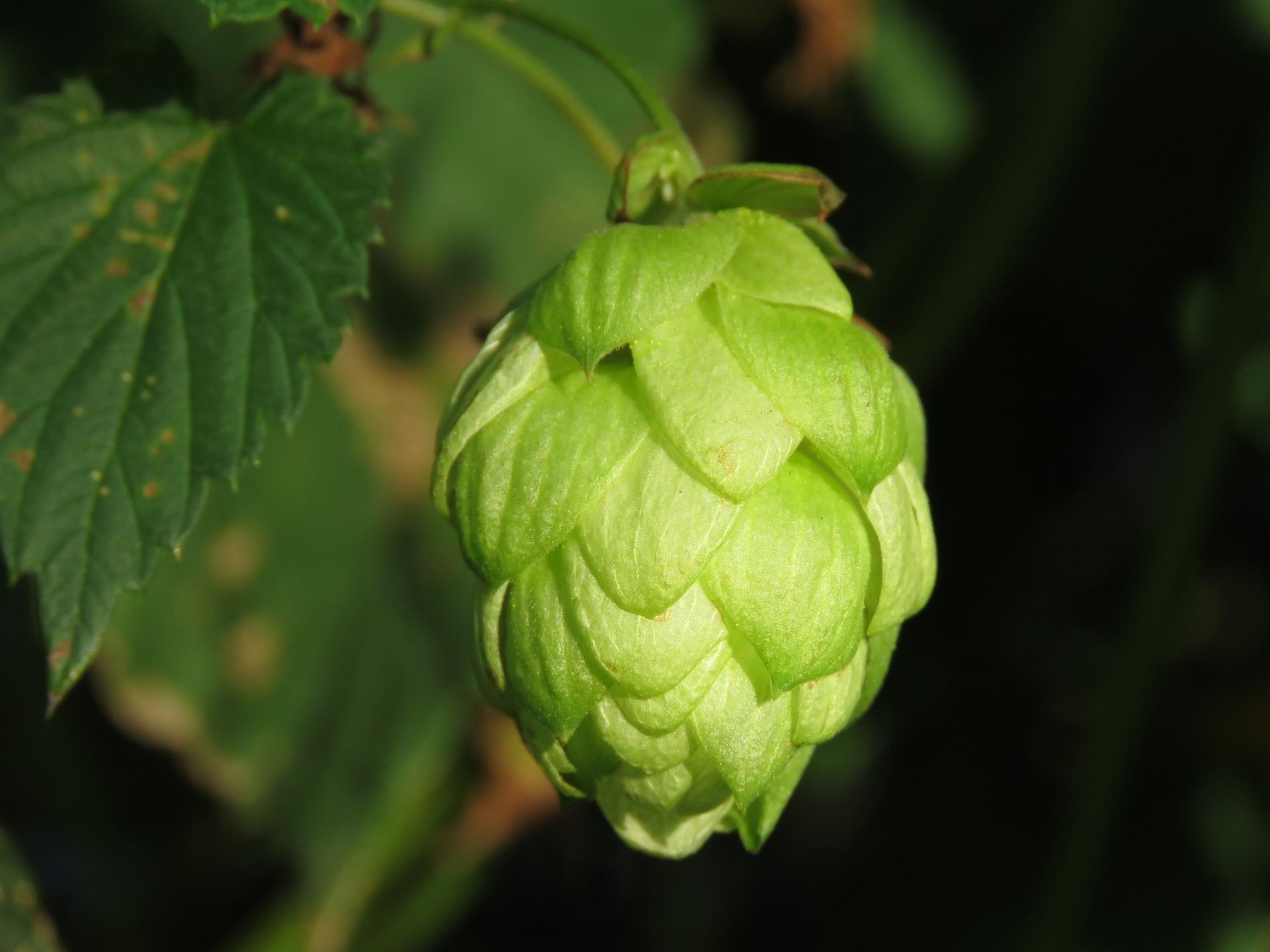 Podsumowanie 2018 r. na rynku piw kraftowych