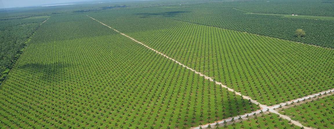 WWF: Olej palmowy FERRERO najbardziej zrównoważony