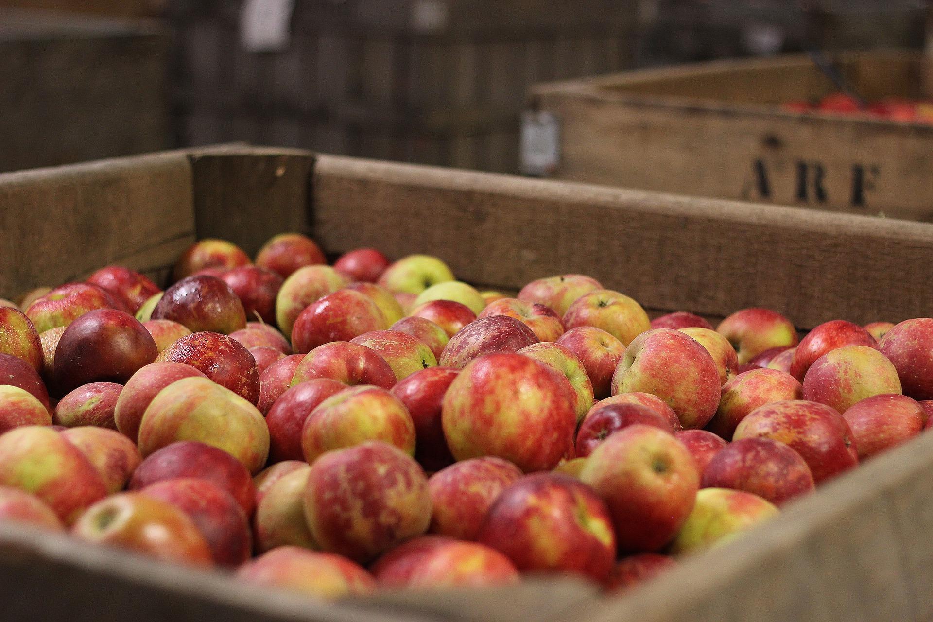 Polskie jabłka i cydr – nowe otwarcie