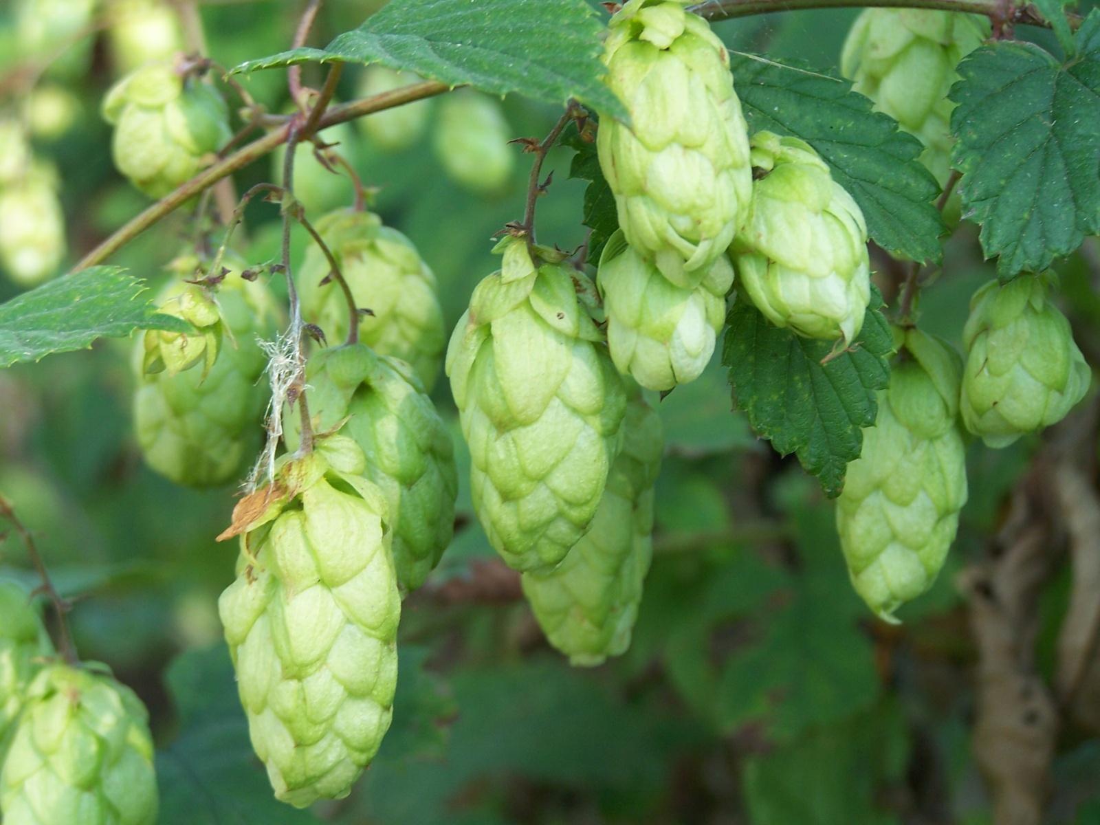 Rynek piwa w Polsce w 2015 roku i jego znaczenie dla gospodarki europejskiej