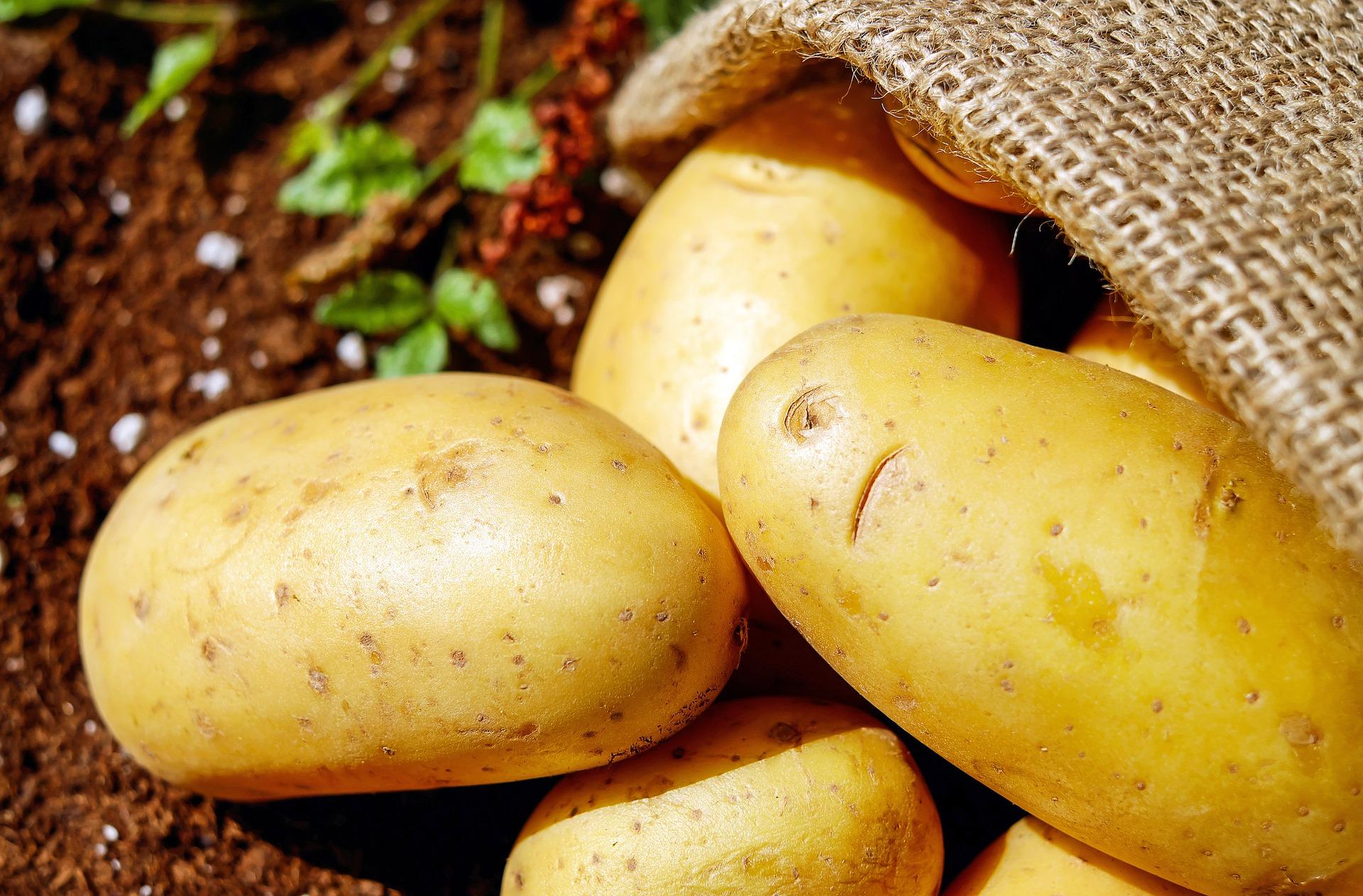 Ministerstwo Rolnictwa szykuje zmiany dla producentów ziemniaków
