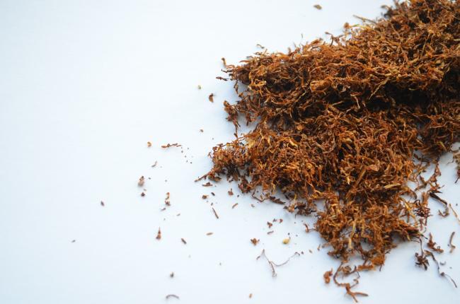 Udaremniono przewóz 20 ton suszu tytoniowego