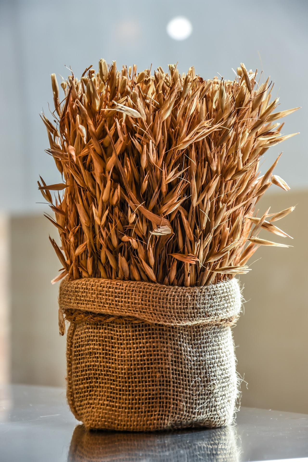 Wysoki eksport pszenicy z Polski