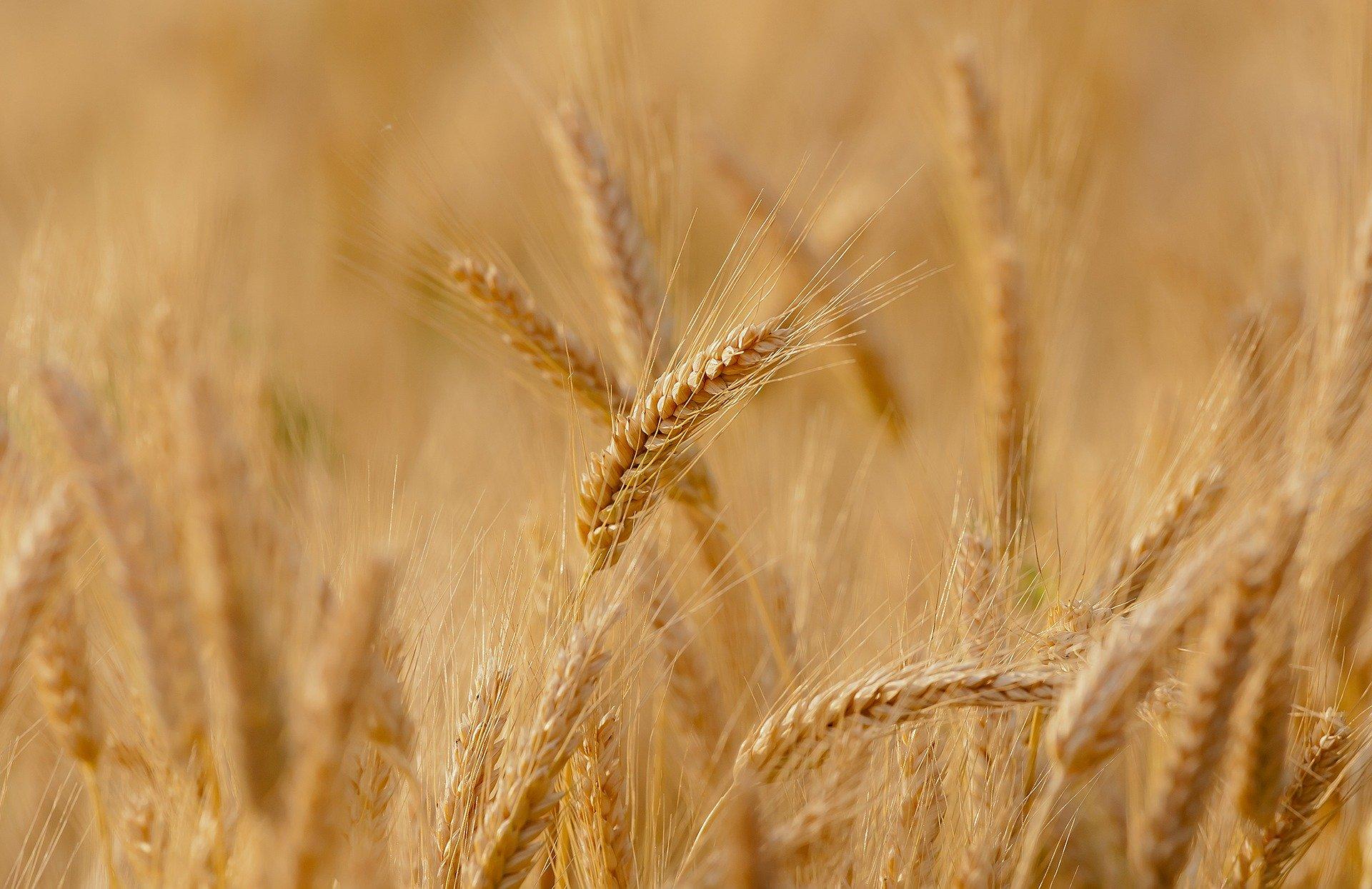 Ceny produktów rolnych w lipcu 2020 r.