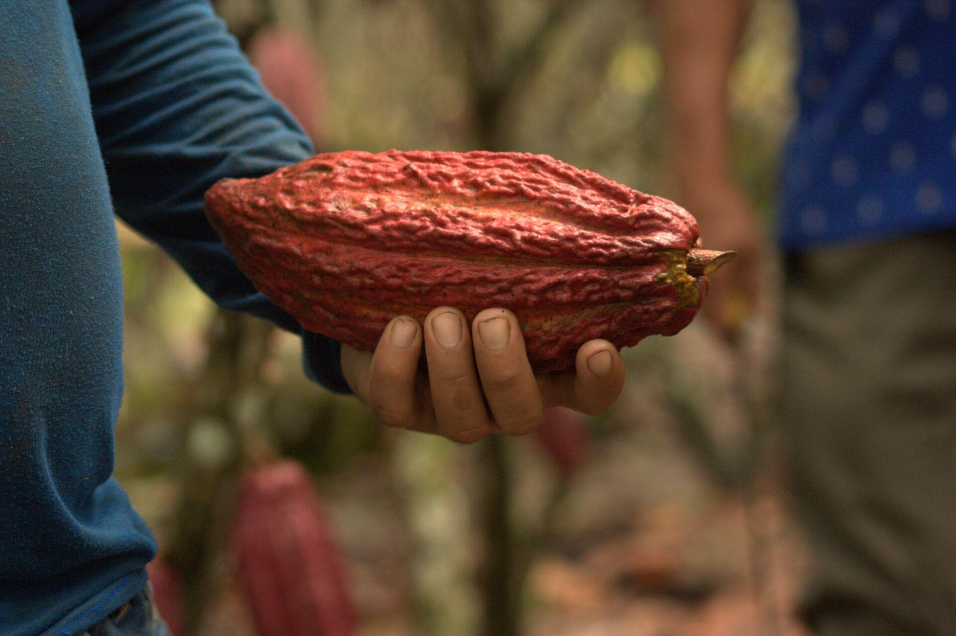 1 października przypada Światowy Dzień Kakao