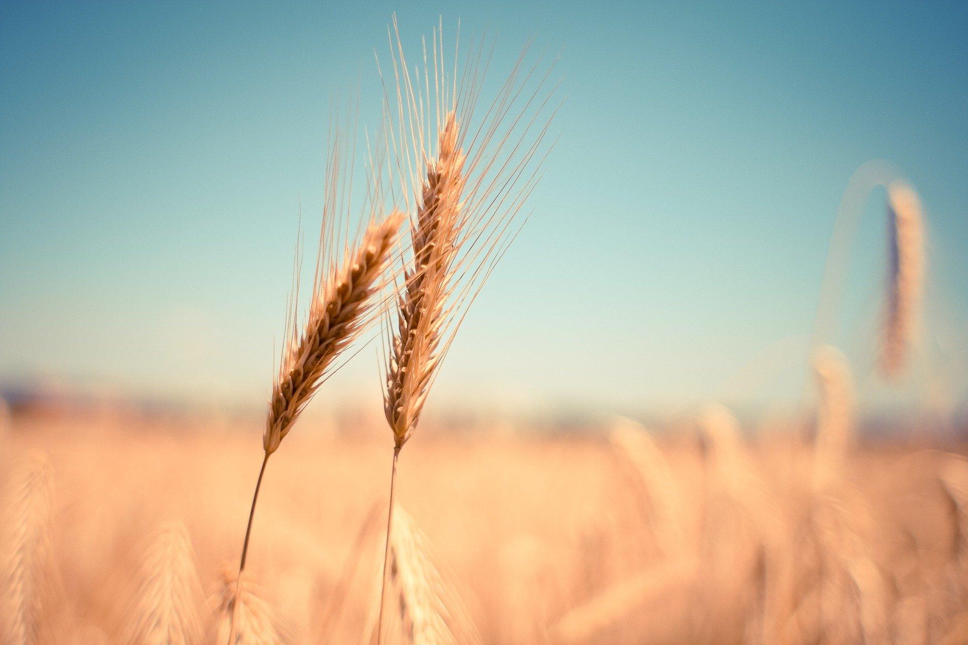 Ceny mąki ruszyły w górę