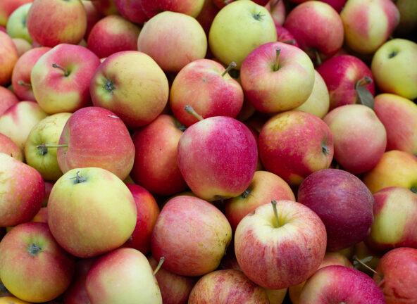 Ruszą kontrole cen jabłek w punktach skupu