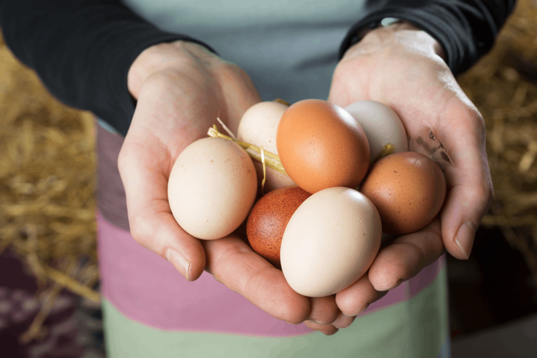 Nestlé stosuje wyłącznie jaja z chowu bezklatkowego