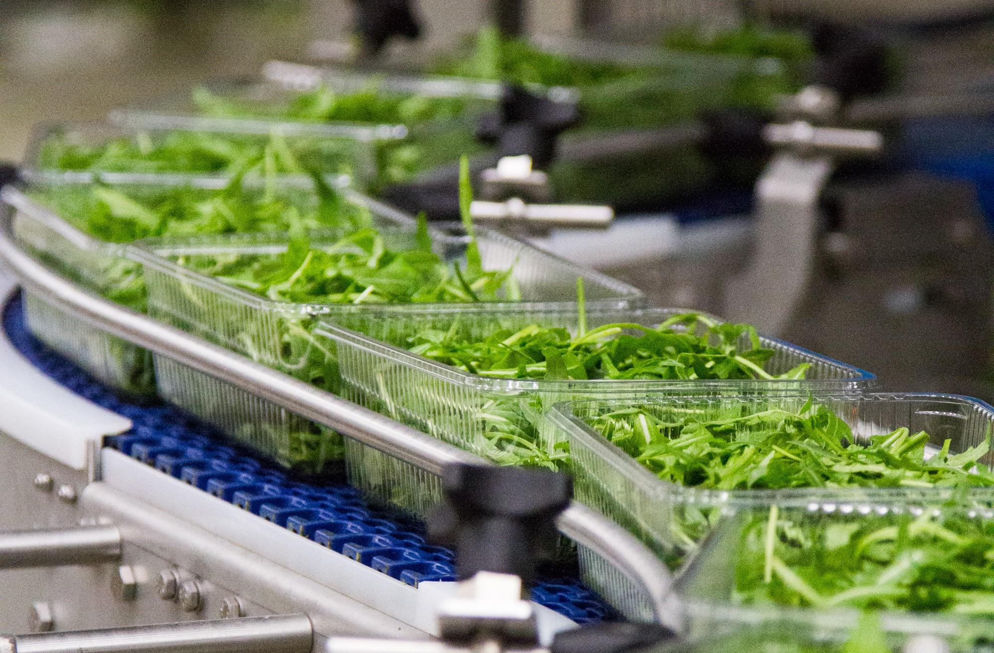 Firma Green Factory kupiła węgierską fabrykę